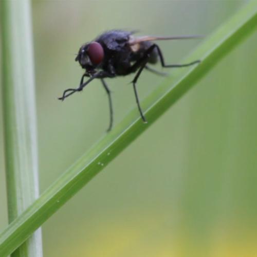L'Avis des mouches et l'Affaire coccinelle