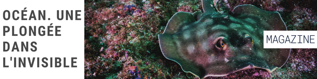 Pop'Sciences Mag: Océan. Une plongée dans l'invisible