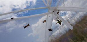 Prélèvement d'insectes