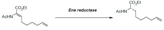 ene-reductase-scheme