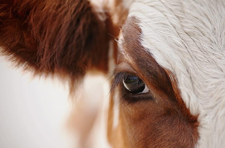 L'alimentation animale et le bicarbonate de sodium