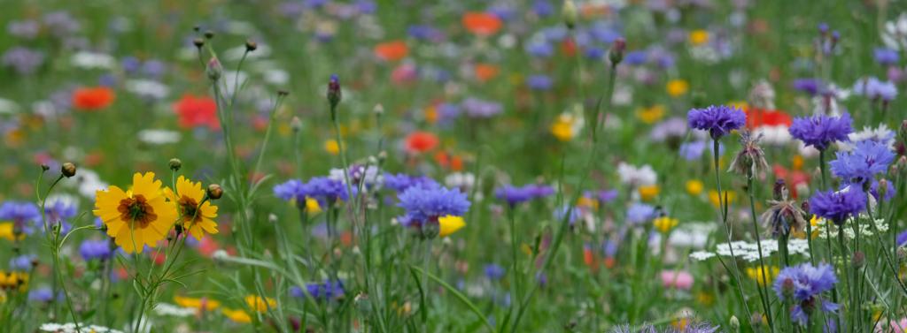 Champ de fleurs bleues, jaunes et rouges. Avec des matières premières naturelles, Seqens Cosmetics Natural Ingredients peut vous aider à fabriquer vos ingrédients sur mesure.