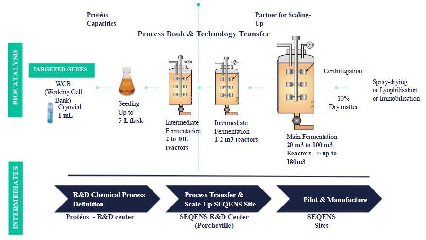 SEQENS-manufacturing-strategy-within-biocatalysis-2